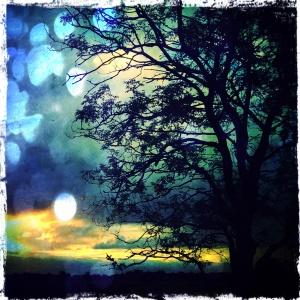 Evening ash tree