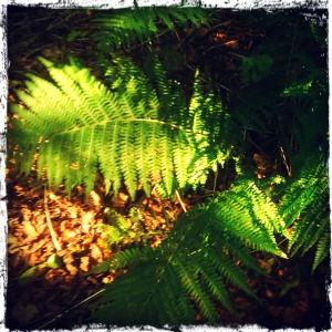 Autumn forest fern