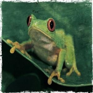 frog haiku
