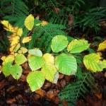 November fern